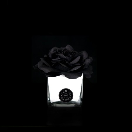 Herve Gambs - Black Couture Rose in White Glass Cube