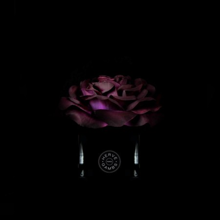 rose-prune